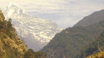 Annapurna & Wildlife